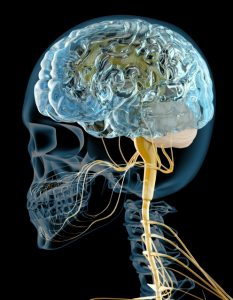 脳神経画像
